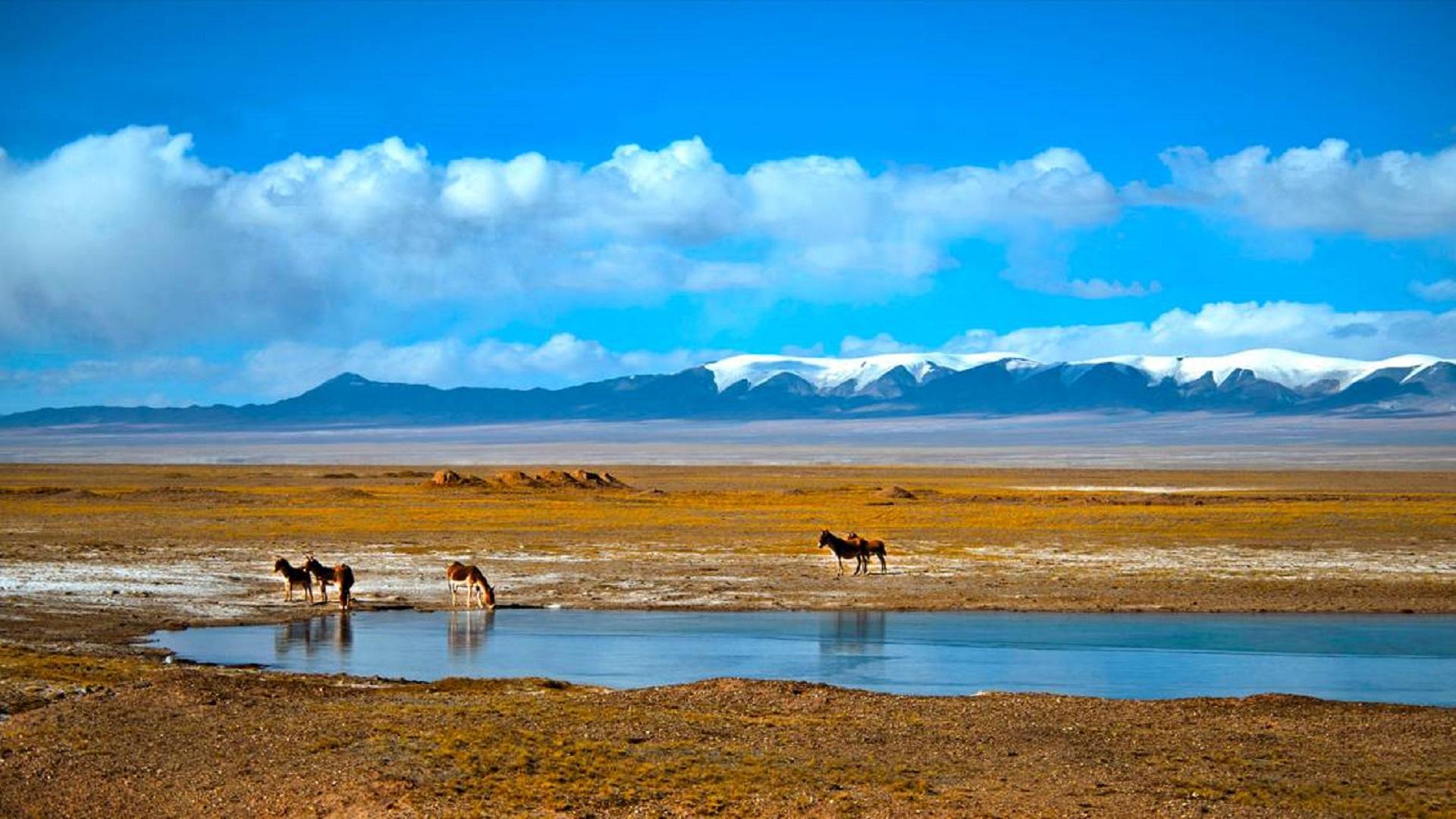 成就中国10部大片的美景之可可西里