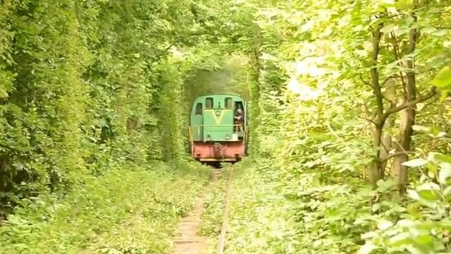 世界上最美的5條樹林隧道,宛如夢幻世界,充滿浪漫氣息